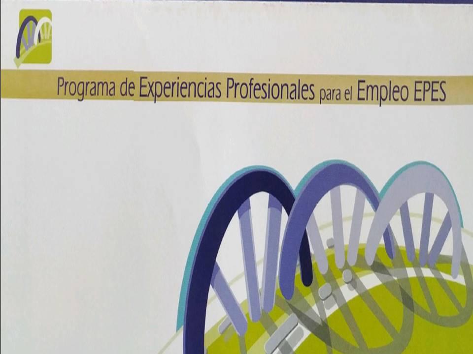 Experiencias Profesionales para el Empleo (EPES), Ayuntamiento de Jerez de la Frontera